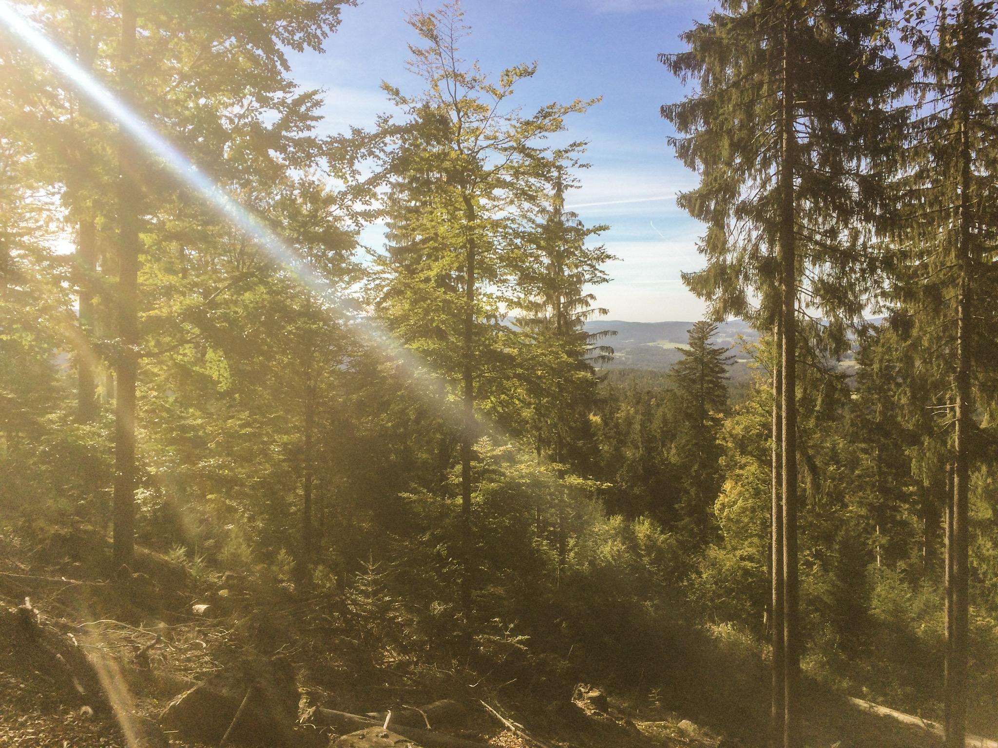 Wald beruhigt und lässt Menschen entspannter werden. Ohne motorisierte Anreise wird es noch entspannter und sogar nachhaltig.